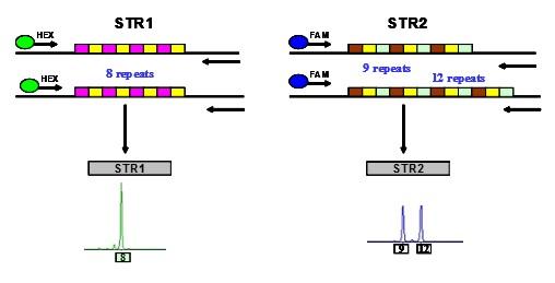 电路 电路图 电子 设计 素材 原理图 508_259